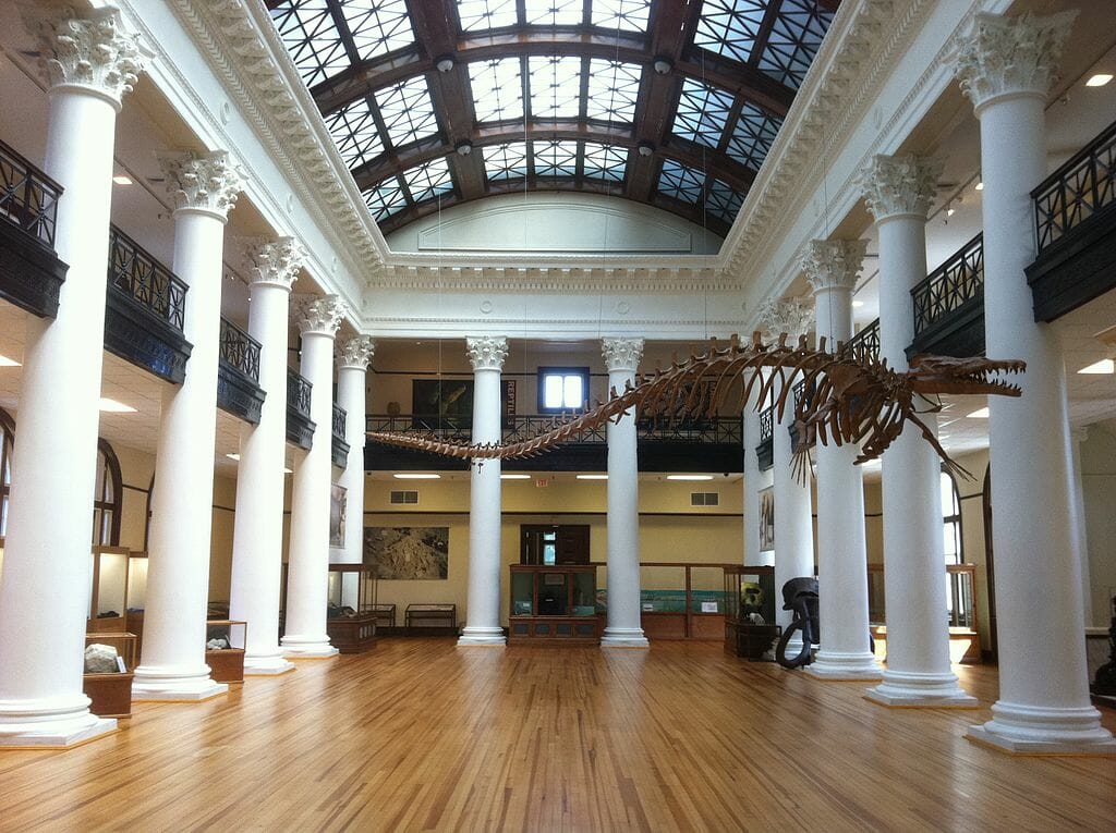 Dinosaur skeleton in a large hall with white columns at the Alabama Museum of Natural History