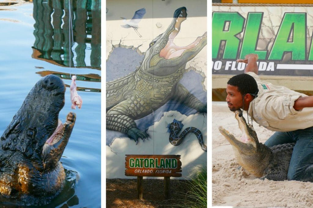 The Ultimate Gatorland Florida Review
