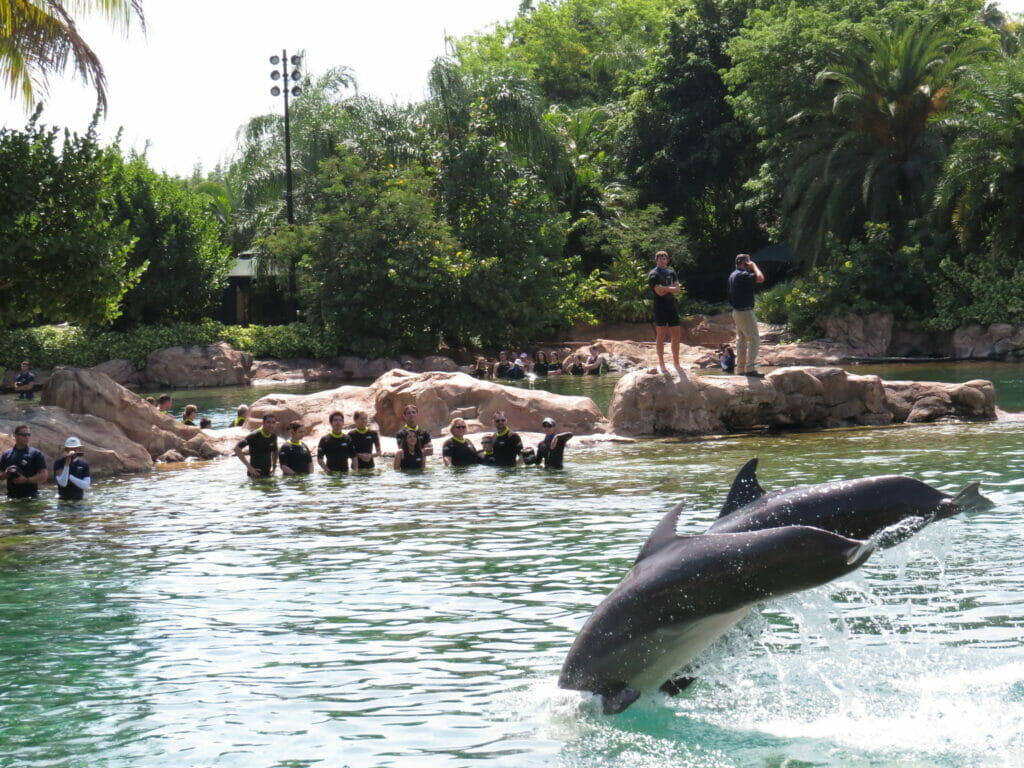 dolphins-at-discovery-cove