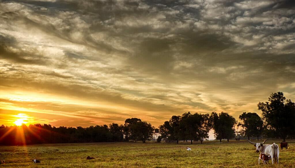 sunset in Tyler, Texas